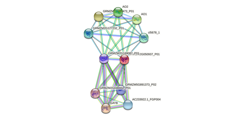 GRMZM2G050937_P01 protein (Zea mays) - STRING interaction network