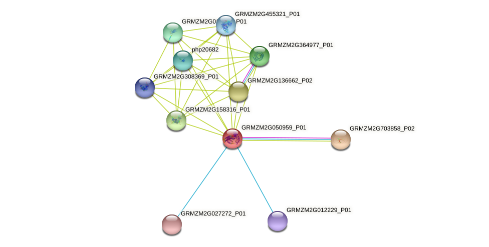 GRMZM2G050959_P01 protein (Zea mays) - STRING interaction network