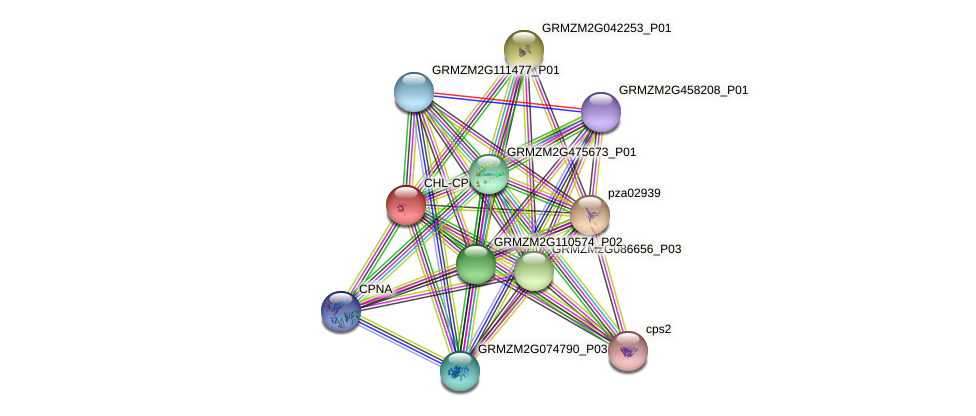 GRMZM2G050961_P01 protein (Zea mays) - STRING interaction network