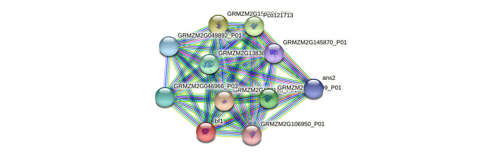 bf1 protein (Zea mays) - STRING interaction network