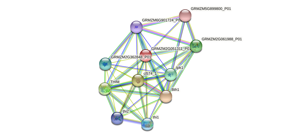 GRMZM2G051311_P01 protein (Zea mays) - STRING interaction network