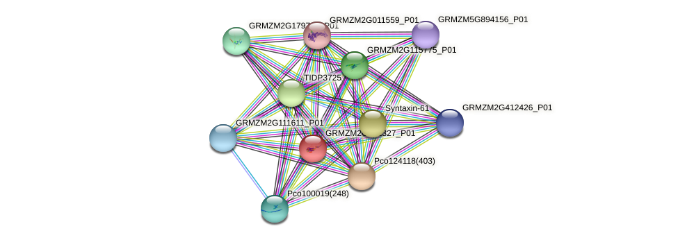 GRMZM2G051327_P01 protein (Zea mays) - STRING interaction network