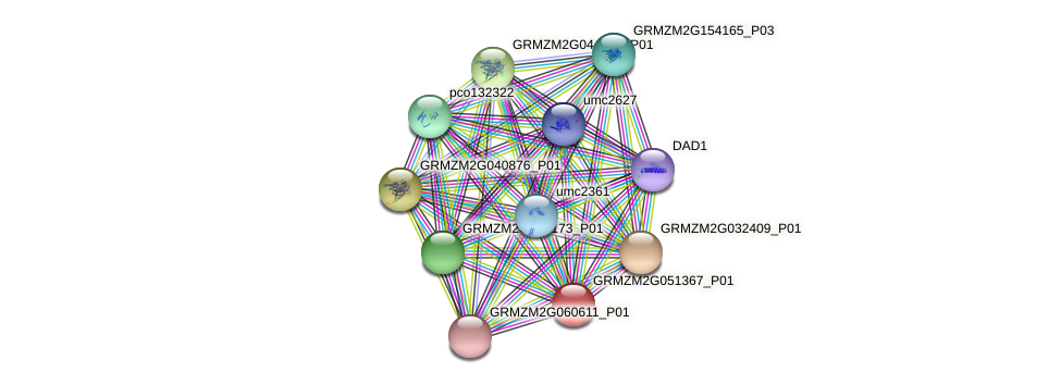 GRMZM2G051367_P01 protein (Zea mays) - STRING interaction network