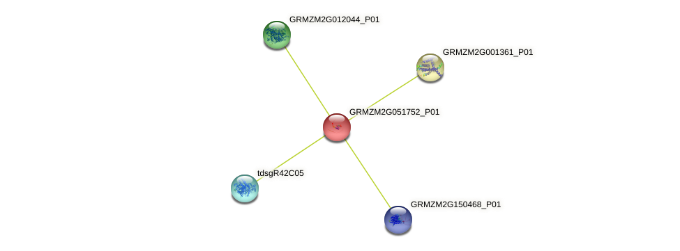 GRMZM2G051752_P01 protein (Zea mays) - STRING interaction network