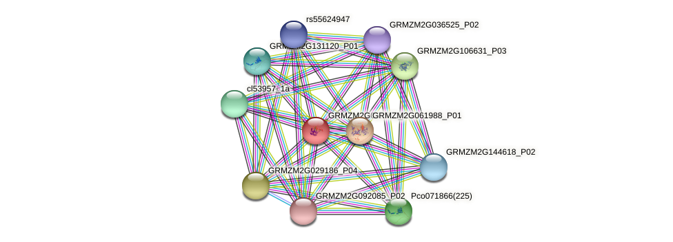 GRMZM2G051756_P01 protein (Zea mays) - STRING interaction network
