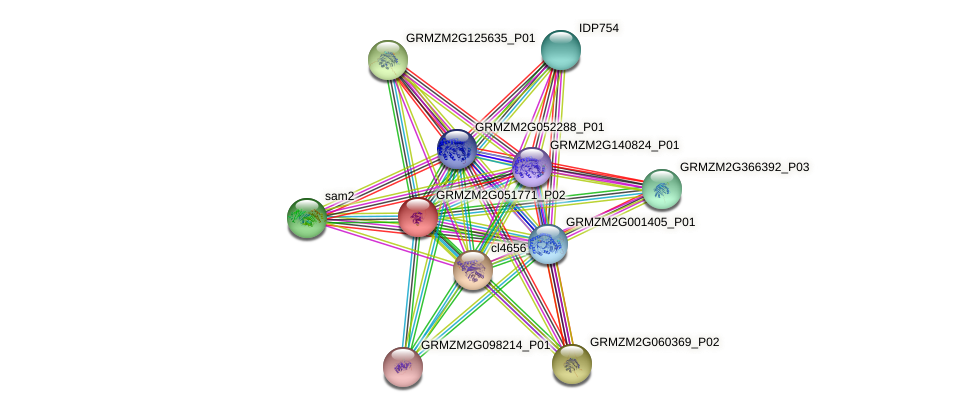 GRMZM2G051771_P02 protein (Zea mays) - STRING interaction network