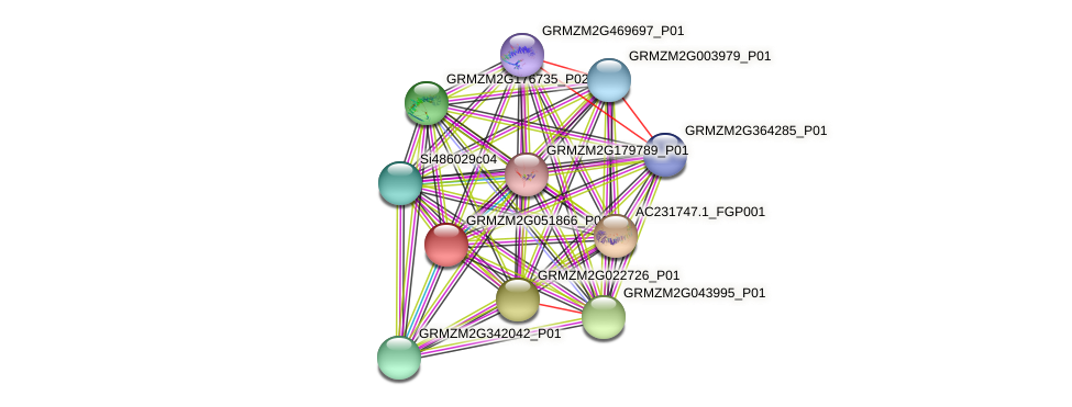 GRMZM2G051866_P01 protein (Zea mays) - STRING interaction network