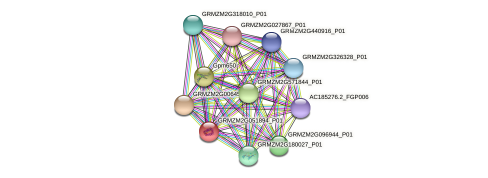 GRMZM2G051894_P01 protein (Zea mays) - STRING interaction network