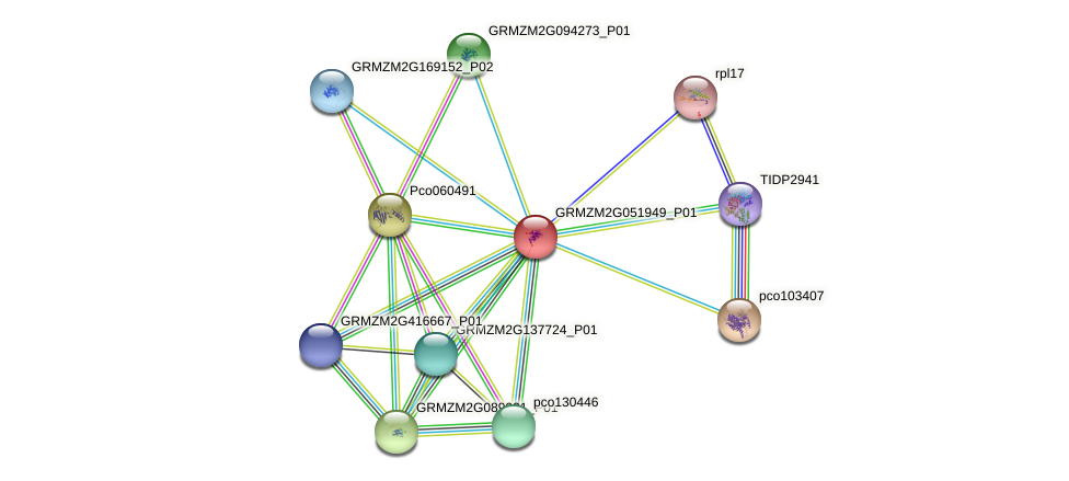 Zm.20638 protein (Zea mays) - STRING interaction network
