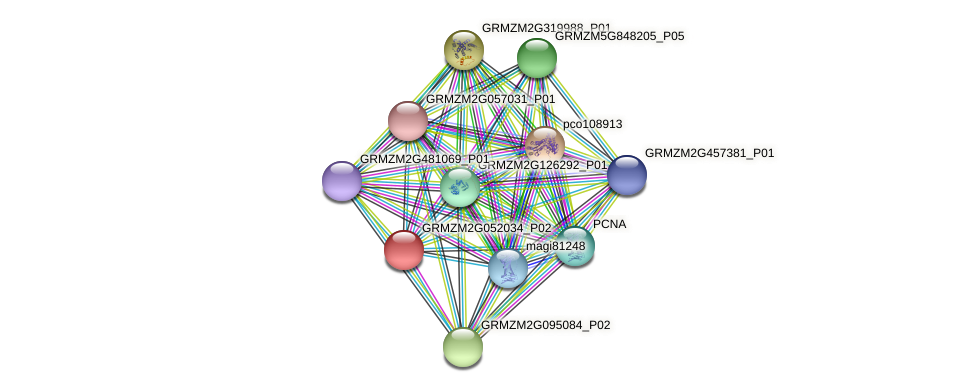 GRMZM2G052034_P02 protein (Zea mays) - STRING interaction network