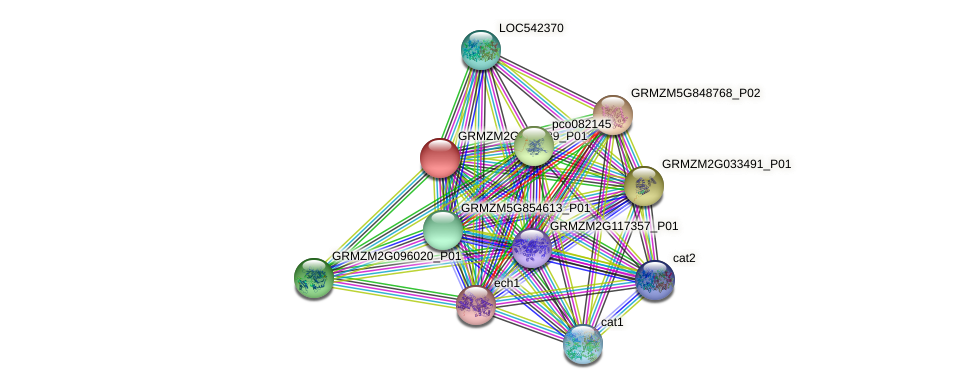 GRMZM2G052389_P01 protein (Zea mays) - STRING interaction network