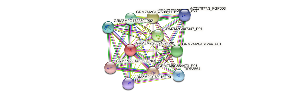 GRMZM2G052402_P01 protein (Zea mays) - STRING interaction network
