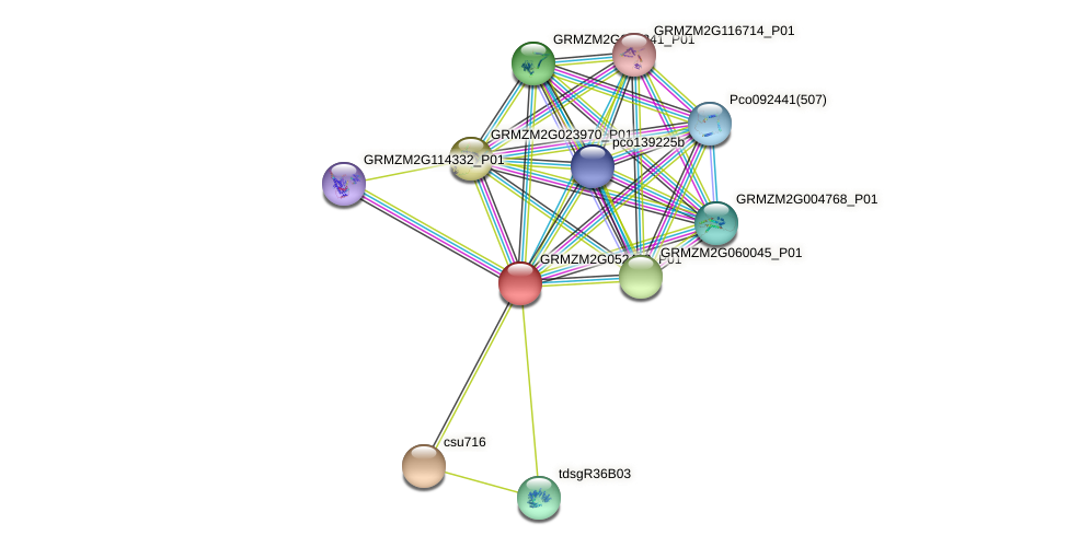 GRMZM2G052403_P01 protein (Zea mays) - STRING interaction network