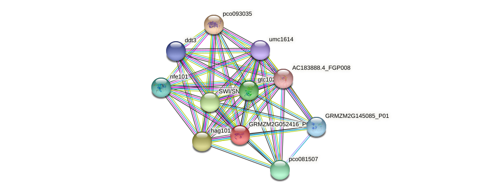 GRMZM2G052416_P01 protein (Zea mays) - STRING interaction network