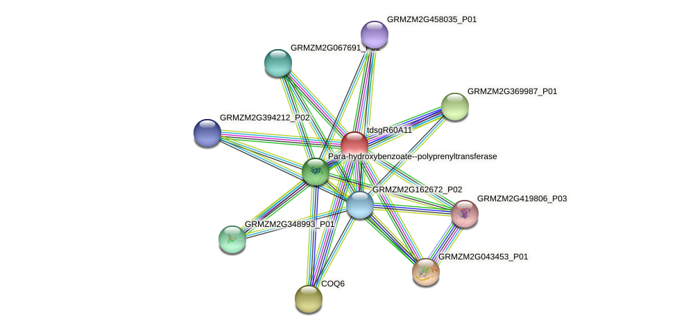 GRMZM2G052418_P01 protein (Zea mays) - STRING interaction network