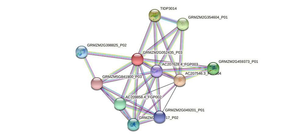 GRMZM2G052435_P03 protein (Zea mays) - STRING interaction network