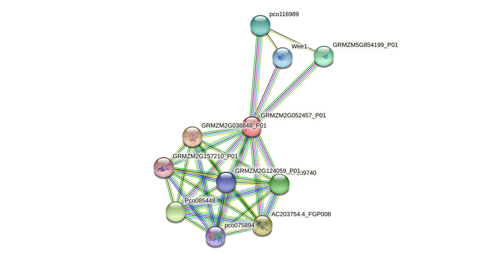 GRMZM2G052457_P01 protein (Zea mays) - STRING interaction network