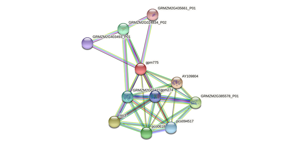 gpm775 protein (Zea mays) - STRING interaction network