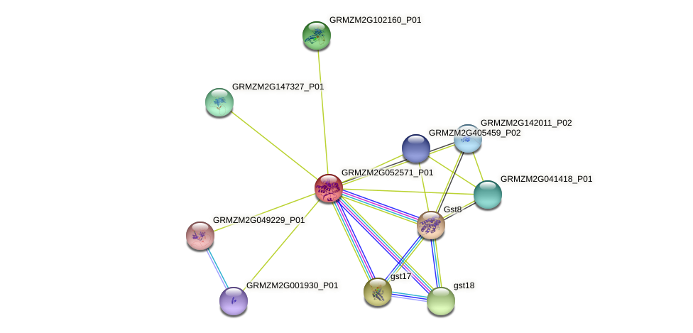 GRMZM2G052571_P01 protein (Zea mays) - STRING interaction network