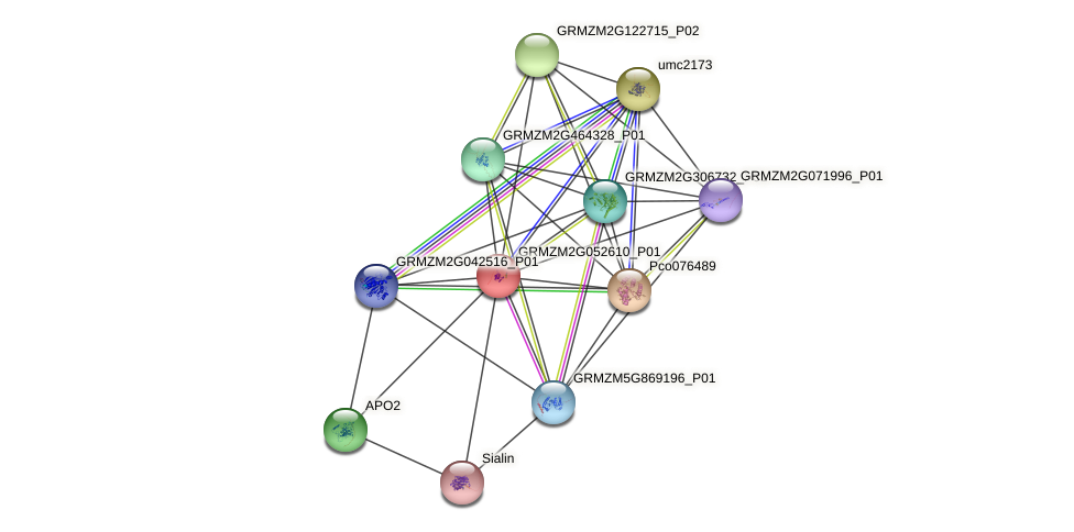 GRMZM2G052610_P01 protein (Zea mays) - STRING interaction network