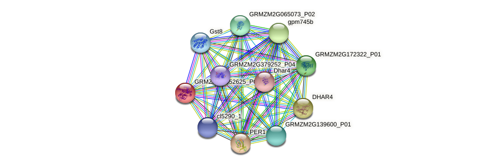 GRMZM2G052625_P01 protein (Zea mays) - STRING interaction network
