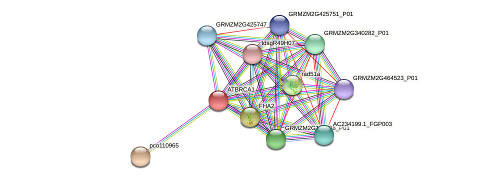 GRMZM2G052688_P01 protein (Zea mays) - STRING interaction network
