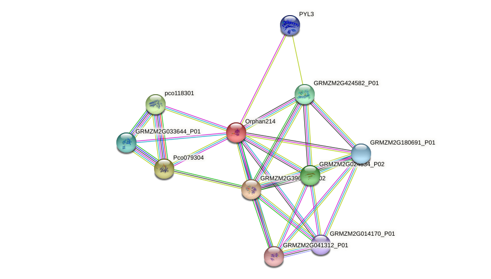 Orphan214 protein (Zea mays) - STRING interaction network