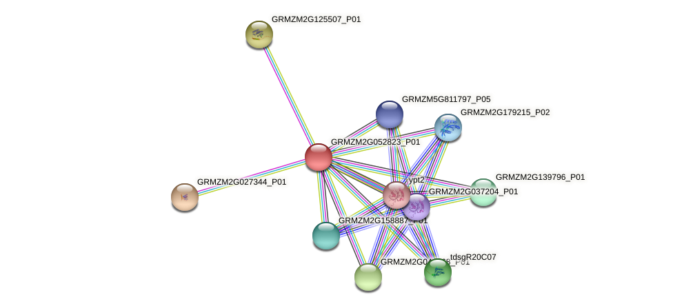Zm.4363 protein (Zea mays) - STRING interaction network