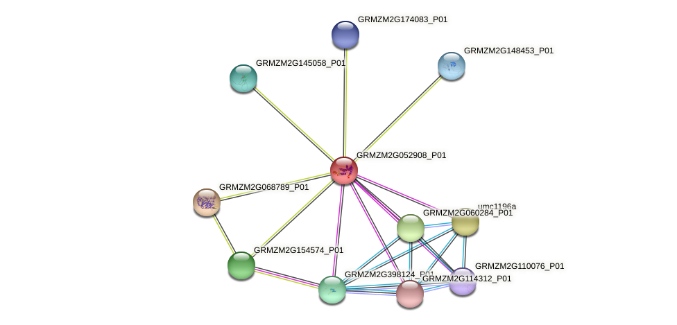 GRMZM2G052908_P01 protein (Zea mays) - STRING interaction network