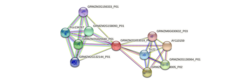 Zm.73159 protein (Zea mays) - STRING interaction network
