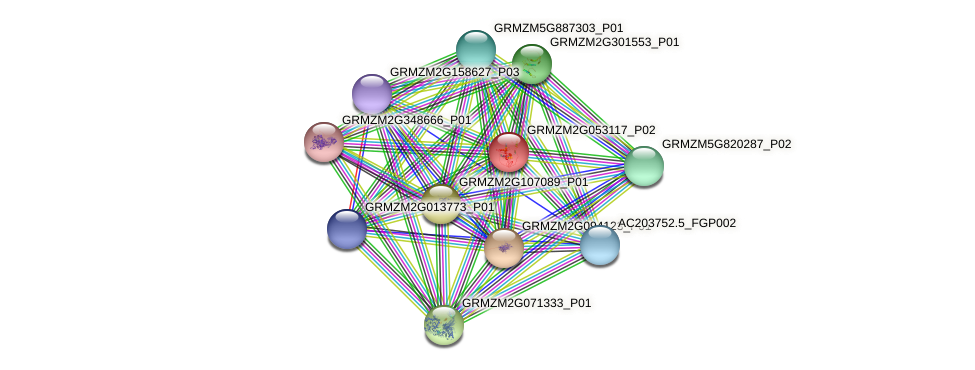 GRMZM2G053117_P02 protein (Zea mays) - STRING interaction network