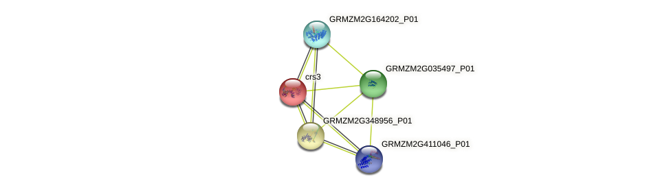 GRMZM2G053196_P01 protein (Zea mays) - STRING interaction network