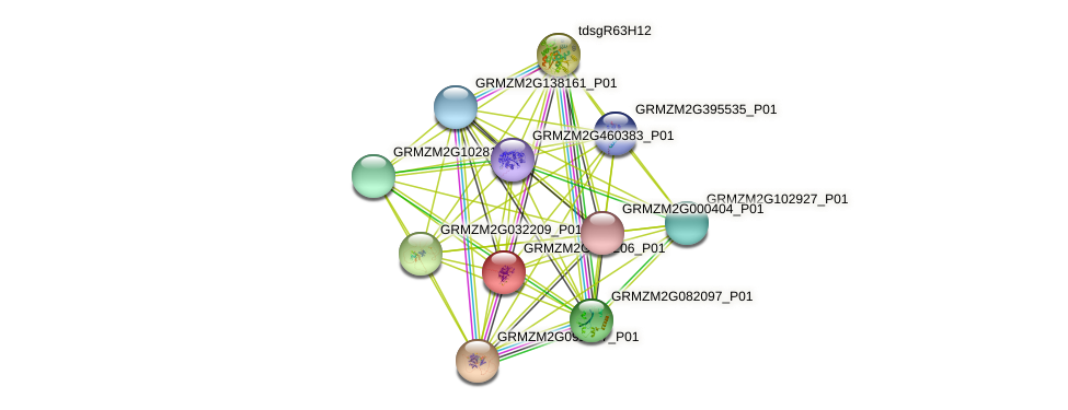 GRMZM2G053206_P01 protein (Zea mays) - STRING interaction network
