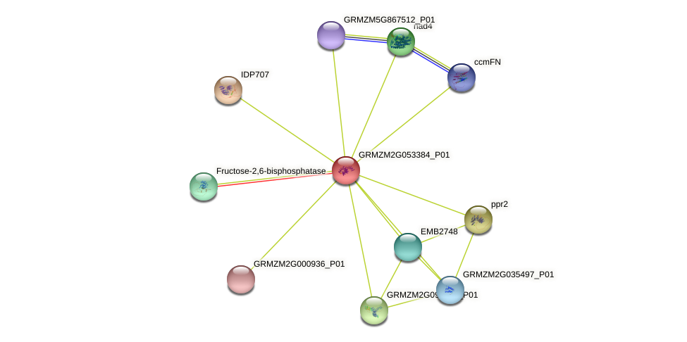 GRMZM2G053384_P01 protein (Zea mays) - STRING interaction network
