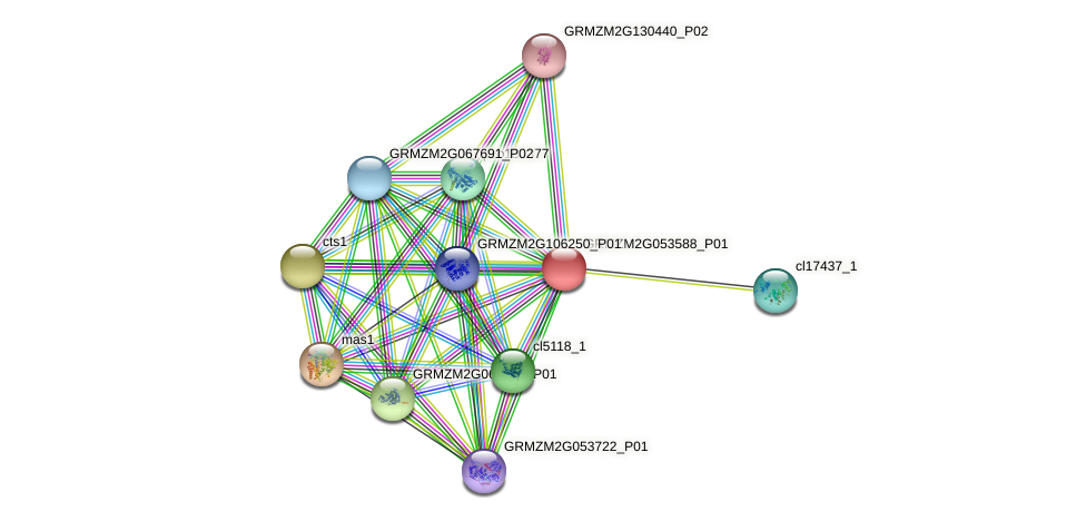 Zm.137550 protein (Zea mays) - STRING interaction network