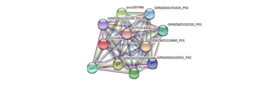 pco144644 protein (Zea mays) - STRING interaction network