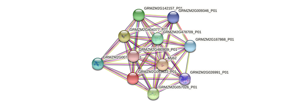 GRMZM2G053622_P01 protein (Zea mays) - STRING interaction network