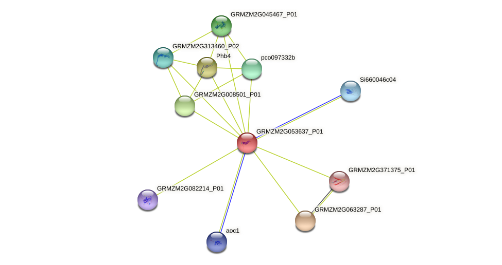 GRMZM2G053637_P01 protein (Zea mays) - STRING interaction network