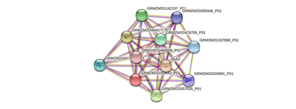 GRMZM2G053642_P01 protein (Zea mays) - STRING interaction network
