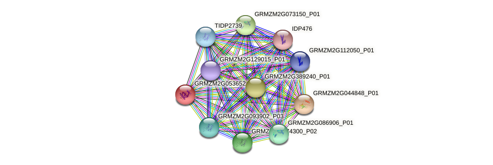 GRMZM2G053652_P01 protein (Zea mays) - STRING interaction network