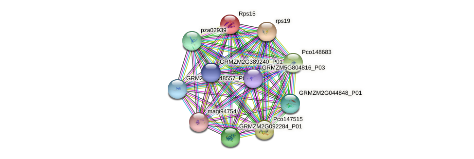 GRMZM2G053653_P01 protein (Zea mays) - STRING interaction network