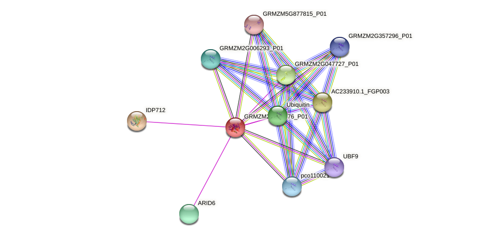 Zm.36815 protein (Zea mays) - STRING interaction network