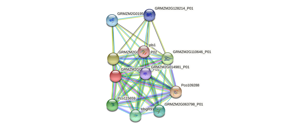 GRMZM2G053711_P05 protein (Zea mays) - STRING interaction network