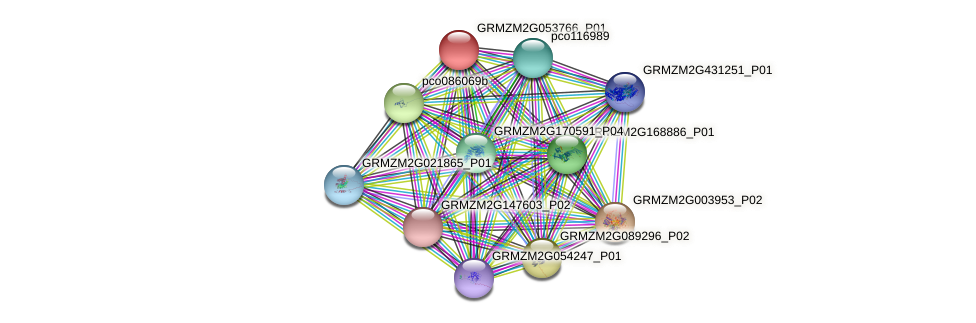 GRMZM2G053766_P01 protein (Zea mays) - STRING interaction network