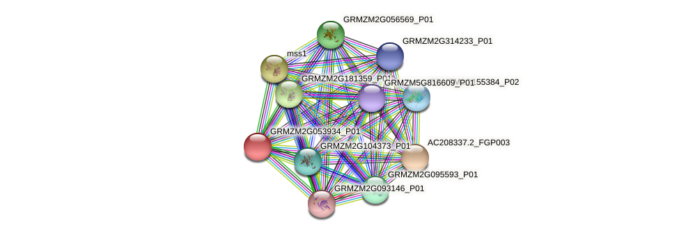 GRMZM2G053934_P01 protein (Zea mays) - STRING interaction network