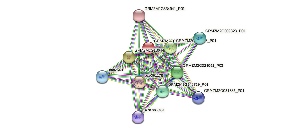 GRMZM2G053939_P01 protein (Zea mays) - STRING interaction network