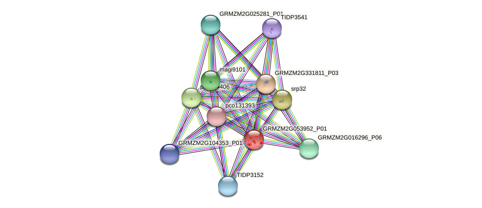 GRMZM2G053952_P01 protein (Zea mays) - STRING interaction network