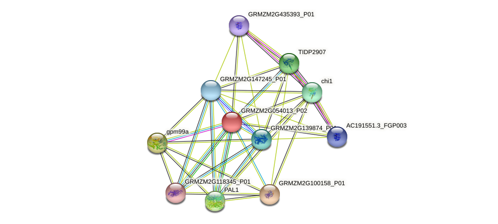 GRMZM2G054013_P02 protein (Zea mays) - STRING interaction network