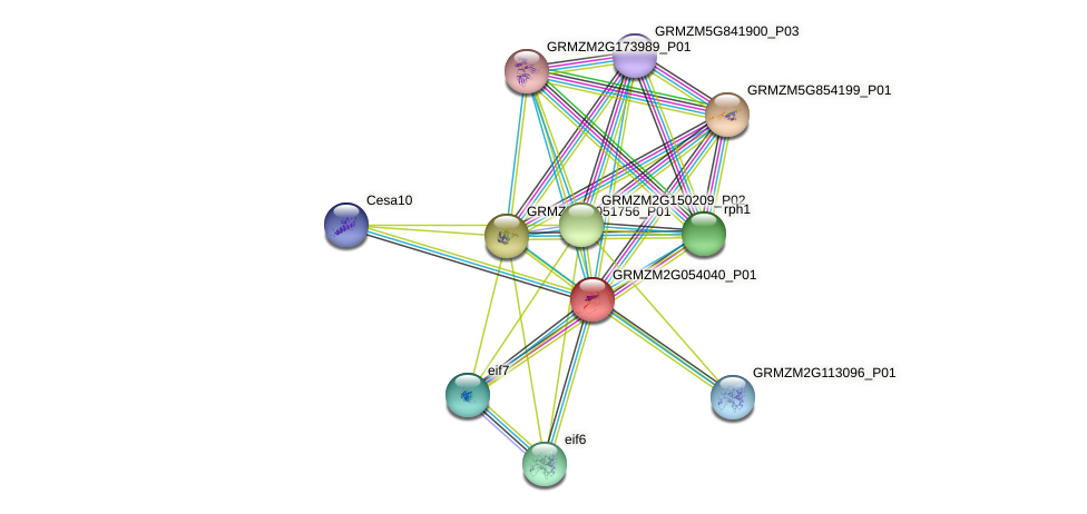 Zm.26486 protein (Zea mays) - STRING interaction network