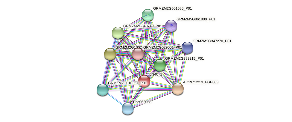 cl340_1 protein (Zea mays) - STRING interaction network